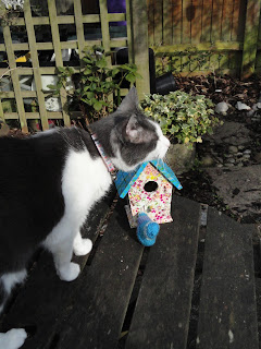 Cat investigating decoupaged birdhouse and knitted bird