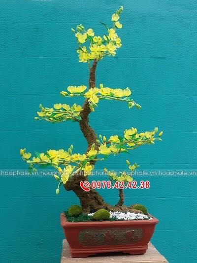 Goc bonsai cay hoa mai tai Do Quang