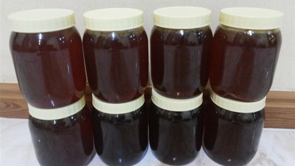 دراسة جدوى فكرة مشروع تجارة العسل الاسود فى مصر 2019