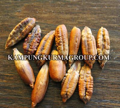 Tepung Biji Kurma, Tepung kue Bergizi Tinggi, kampungkurmagroup.com