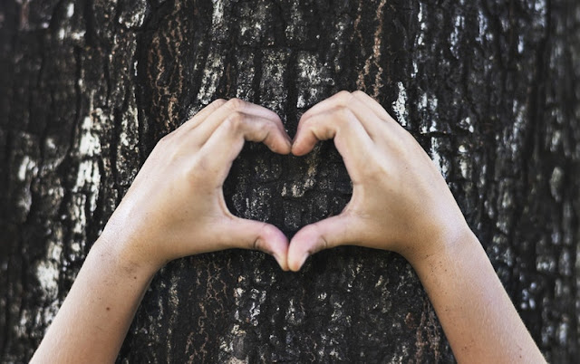 Hands made into a hearts shape over the bark of a tree
