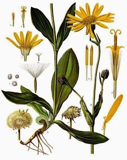 Plantas medicinais: sobre os nomes populares - I