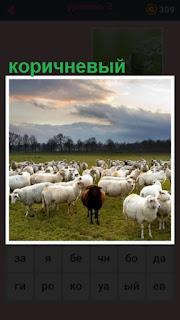 среди стада баранов на пастбище имеется один коричневого цвета