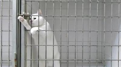Mengurung Kucing di Tempat Khusus yang Luas