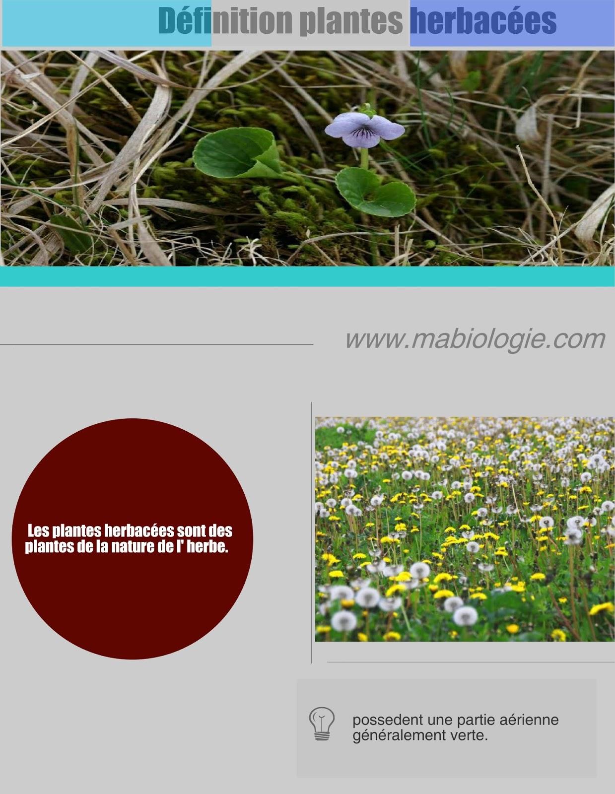Définition plantes herbacées