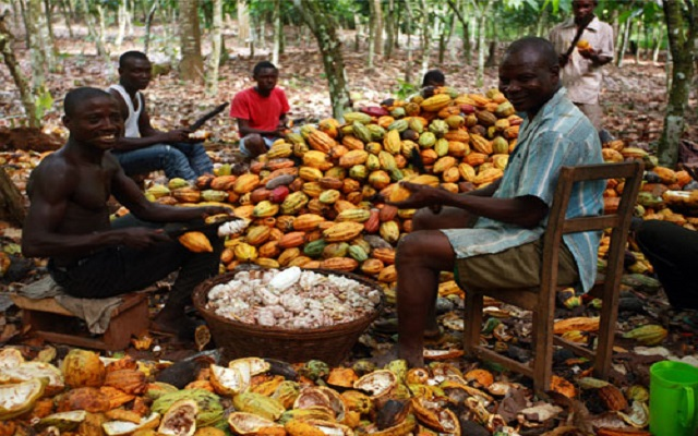 Newmont to spray cocoa farms free of charge
