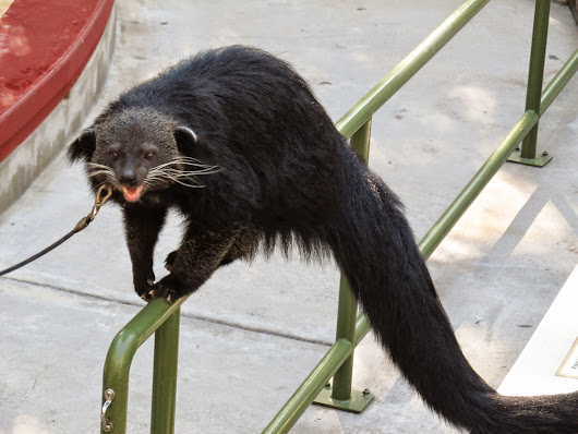 Life with Dylan: Happy World Binturong Day!