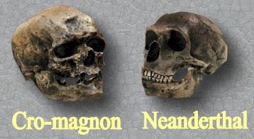 Cráneo del Hombre de Cromanón y del Neanderthal