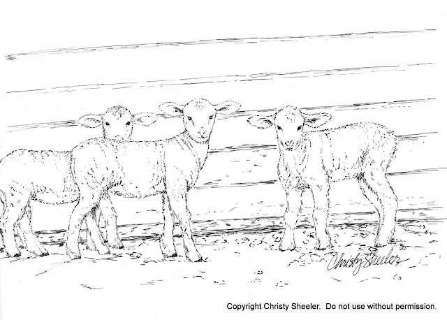 The completed ink drawing Lambs by Christy Sheeler 2016.  She Must Make Art.
