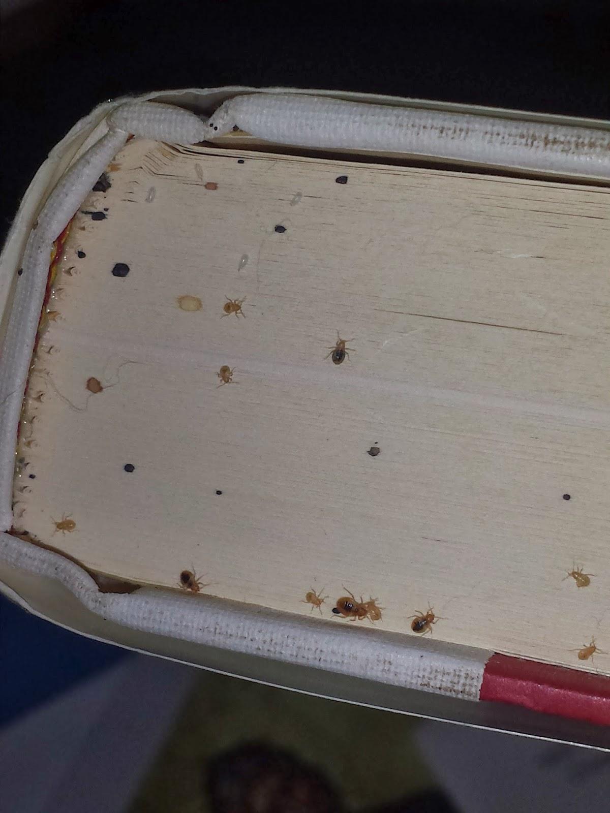 Bedbugschicago 855 855 Bugs Bed Bugs On Your Books