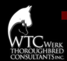 WERK THOROUGHBREDS