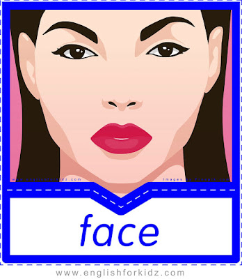 English flashcard, body vocabulary, face