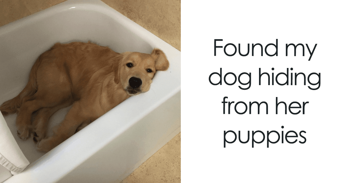 30 Adorable Dog Memes That Will Make Your Day!