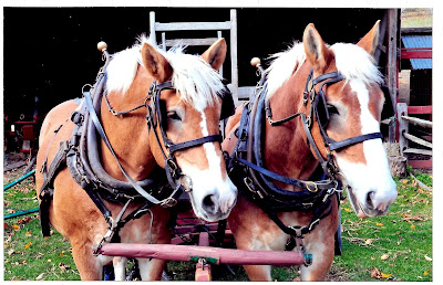 Iconic Horse Duo Looking Towards Future Retirement at Fosterfields Living Historic Farm -- Silent Art Auction to Help Finance a Nice Retirement