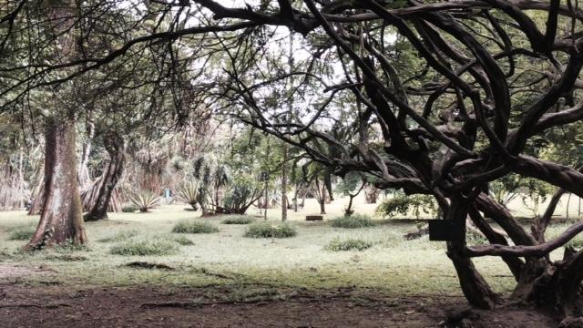 kebun raya bogor, kamera iphone 5s
