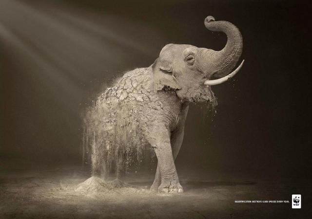 Rhetorical Analysis: WWF Ad