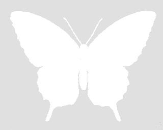 butterfly cutout digital silhouette