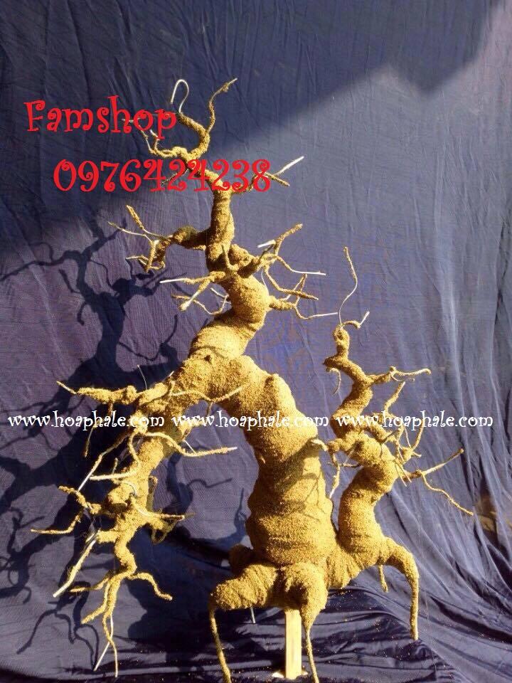 Goc bonsai mai dao tai Quan Nhan