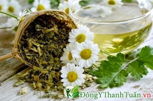 Trà hoa cúc là thuốc chữa viêm mũi dị ứng