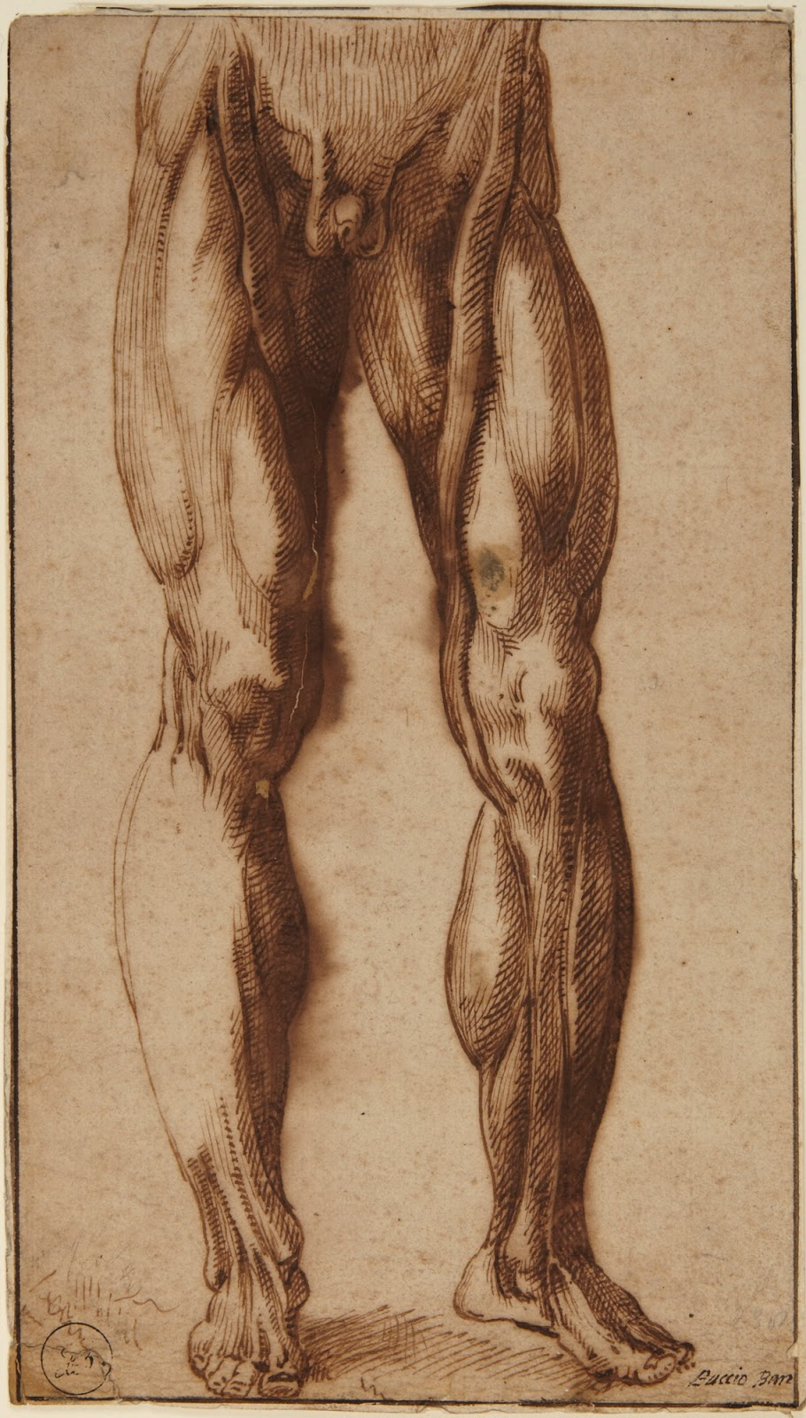 Spencer Alley: Anatomy by and for Artists