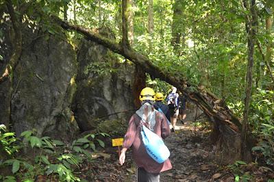 Berjalan menyusuri hutan Mulu National Park