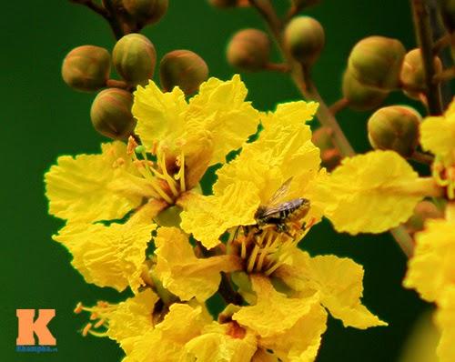 Những loài hoa mùa hè