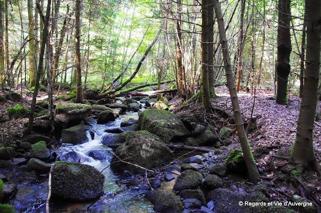 sous-bois, été, ruisseau, ombre