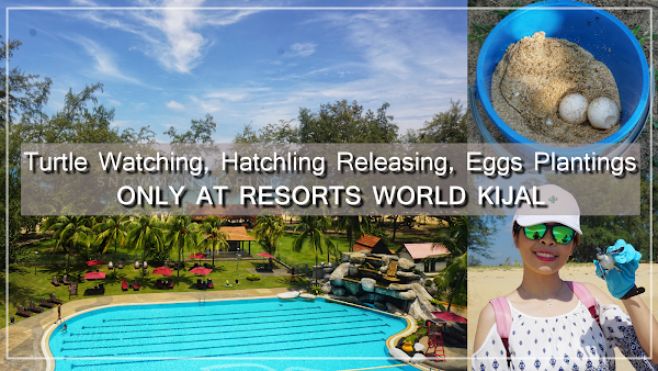 Turtle Watching, Hatching Release and Egg Planting Trip at Resorts World Kijal | Golf, Back to nature and many more!!