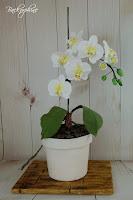 Orchideeen Kuchen
