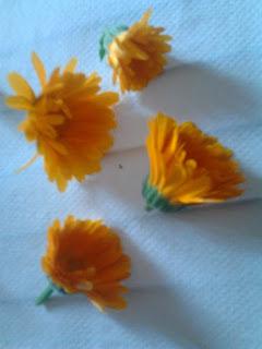 Fleurs fraîches de Soucis Officinal