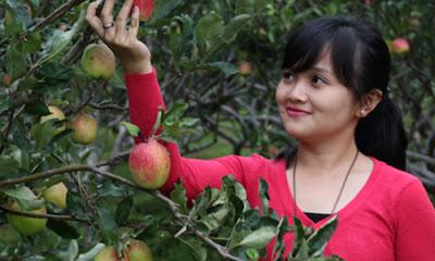 Wisata Petik Apel Malang Kusuma Agrowisata