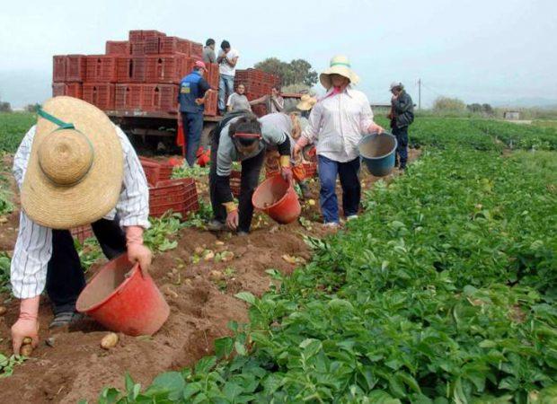Διαβάστε. Ελεύθεροι αγρότες τέλος; Όλοι στην κρατική κολεκτίβα;