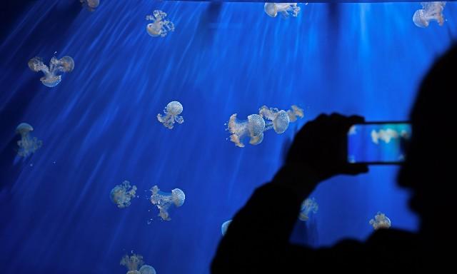 acquario-di-genova-poracci-in-viaggio
