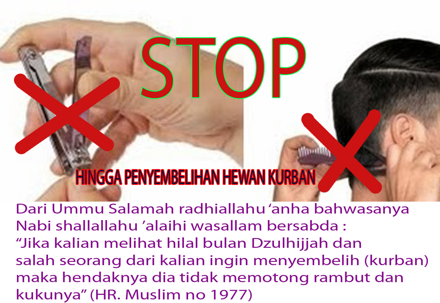 Long life is education   Larangan Mencukur Bagi Yang Hendak ... 2dbe223010