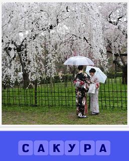 зацвела сакура и рядом стоят две женщины под зонтиками
