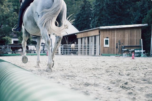 Jak zebrać konia?
