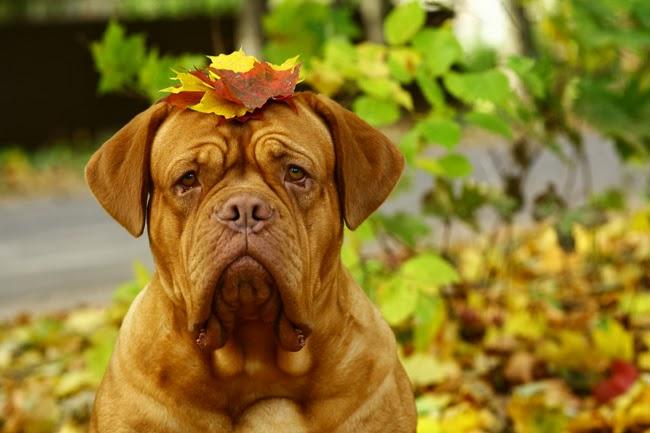 Choroby serca u psów