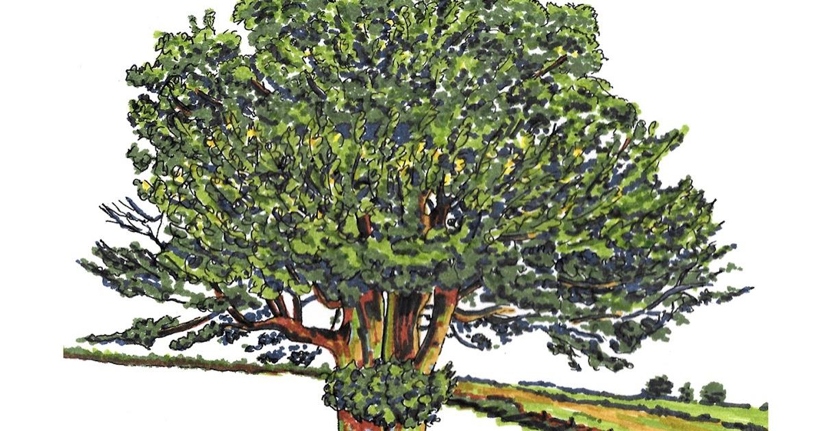 Art Works Tree Drawings