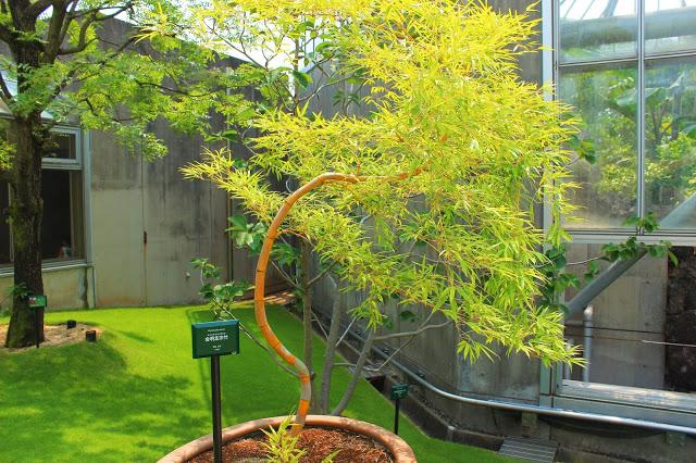 山口県、宇部市のときわ公園の植物園がリニューアルしたよ【Y】 プラントハンター西畠清順、世界を旅する植物館  アジアゾーン 竹
