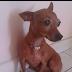 Cadela  desaparecida em Ruy Barbosa neste sábado dia 23