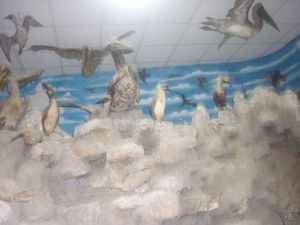 Museo de Zoología Juan Ormea Rodríguez