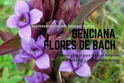 Flores de Bach para el desanimo con Gentian para enfrentar el desanimo y aprender a confiar en si mismo