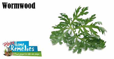 Home Treatments For Intestinal Parasites (worms) In Dogs: Wormwood