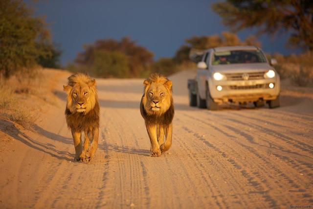 Reasons why Botswana is a great safari destination