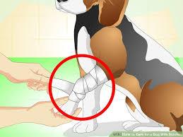 fraturas em cães