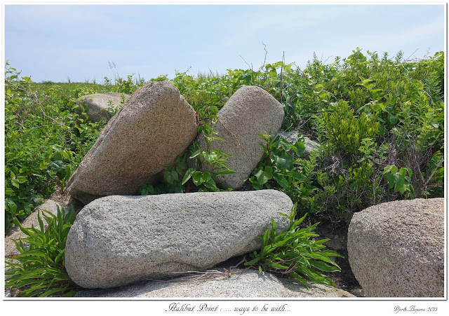 Halibut Point: ... ways to be with...