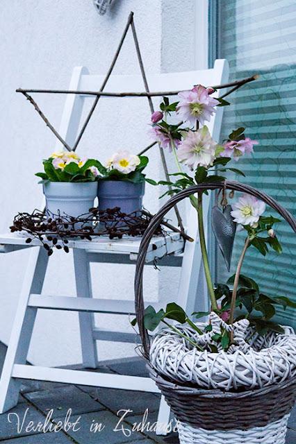 Helleborus orientalis: Diese Lenzrose wird auch Frühlings-Christrose genannt