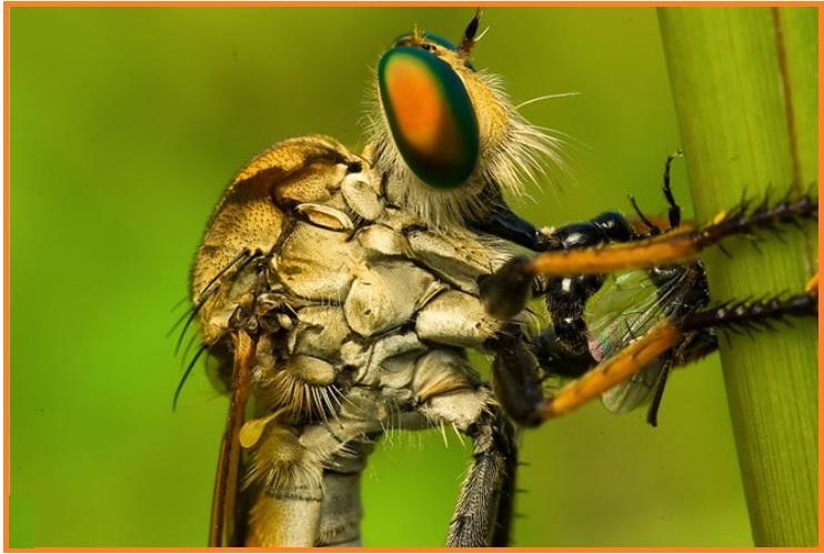 850+ Hewan Arthropoda Ditunjukkan Oleh Gambar Nomor Terbaik