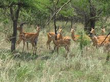 Crafty Salutations Rwandan Wildlife