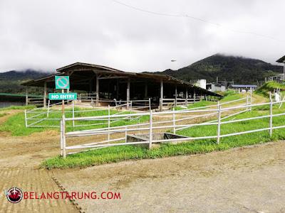 Dairy Farm Kundasang